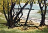 Coastal Scene through Trees