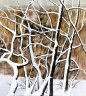 Tree Limbs Covered with Snow