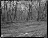 Street Improvement Photographs -- Box 52, Folder 03 (February 19, 1954) -- negative, 1954-02-19