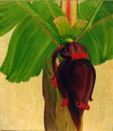 Banana Study II