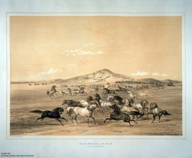 [Catlin's North American Indian Portfolio. Hunting Scenes and Amusements of the Rocky Mountains and Prairies of America., Wild Horses, at Play.]