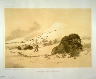 [Catlin's North American Indian Portfolio. Hunting Scenes and Amusements of the Rocky Mountains and Prairies of America., Dying Buffalo Bull, in Snow Drift.]