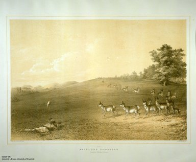 [Catlin's North American Indian Portfolio. Hunting Scenes and Amusements of the Rocky Mountains and Prairies of America., Antelope Shooting.]