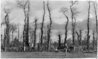 Lison, Woods