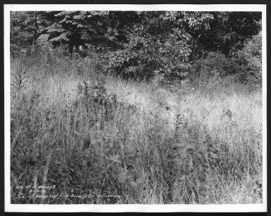 Street Improvement Photographs -- Box 21, Folder 32 (Beverly Hills Dr.) -- print, 1932-08-26