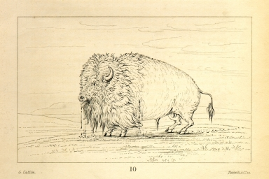 [Wounded buffalo, strewing his blood over the prairies, Letters and Notes on the Manners, Customs, and Condition of the North American Indians.]
