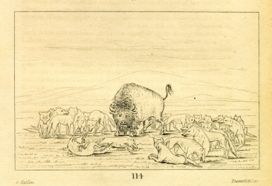 [Wounded buffalo bull surrounded by white wolves, Letters and Notes on the Manners, Customs, and Condition of the North American Indians.]