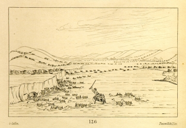 [Buffalo herds crossing the Upper Missouri, Letters and Notes on the Manners, Customs, and Condition of the North American Indians.]