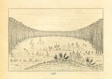 [Beautiful savannah in the pine woods of Florida, Letters and Notes on the Manners, Customs, and Condition of the North American Indians.]