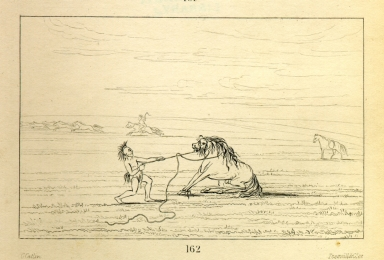 [Breaking down the wild horse, Letters and Notes on the Manners, Customs, and Condition of the North American Indians.]