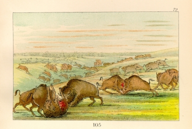 [The Manners, Customs, and Condition of the North American Indians., Buffalo bulls fighting in running season, Upper Missouri]
