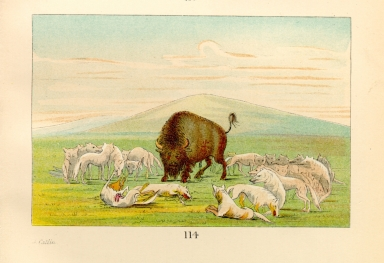 [The Manners, Customs, and Condition of the North American Indians., Wounded buffalo bull surrounded by white wolves]