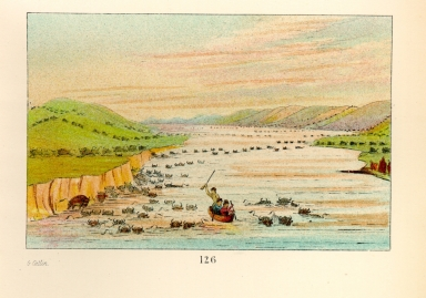 [The Manners, Customs, and Condition of the North American Indians., Buffalo herds crossing the Upper Missouri]