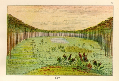 [The Manners, Customs, and Condition of the North American Indians., Beautiful savannah in the pine woods of Florida]