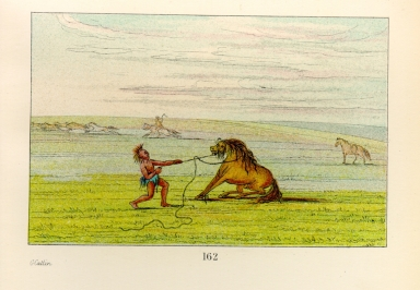 [The Manners, Customs, and Condition of the North American Indians., Breaking down the wild horse]