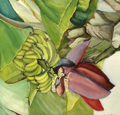 Banana, Bloom and Fruit