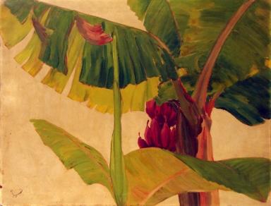 Banana Study I