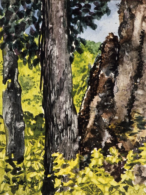 Forest Scene with Cliff