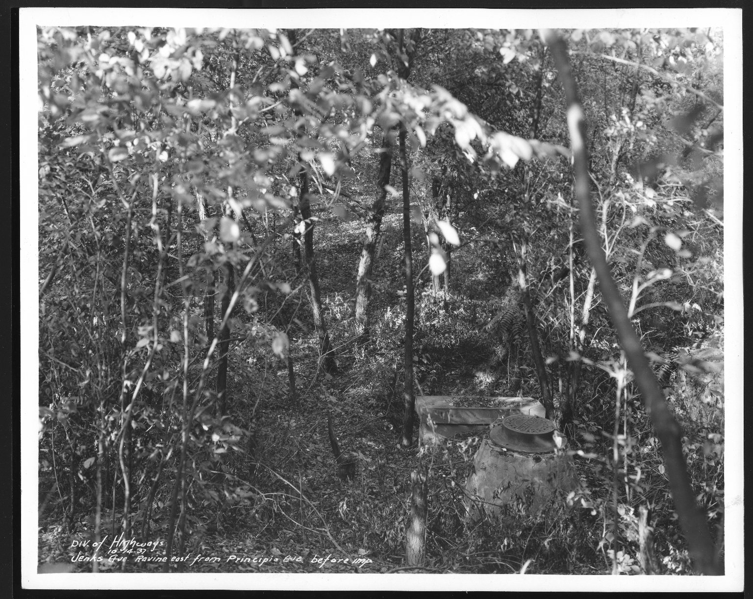 Street Improvement Photographs -- Box 24, Folder 66 (Jenks Street) -- print, 1937-10-14